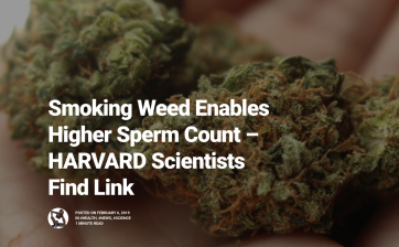 weed helps higher sperm count